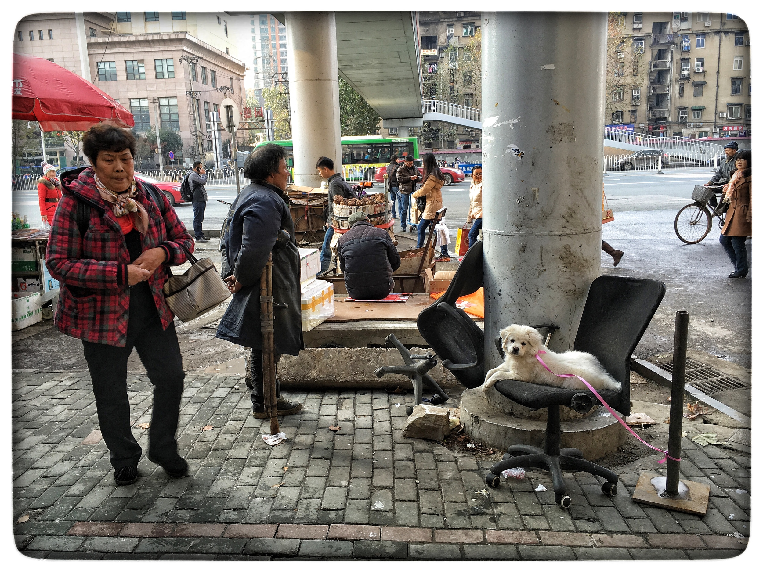 Poor man's dog, Wuhan