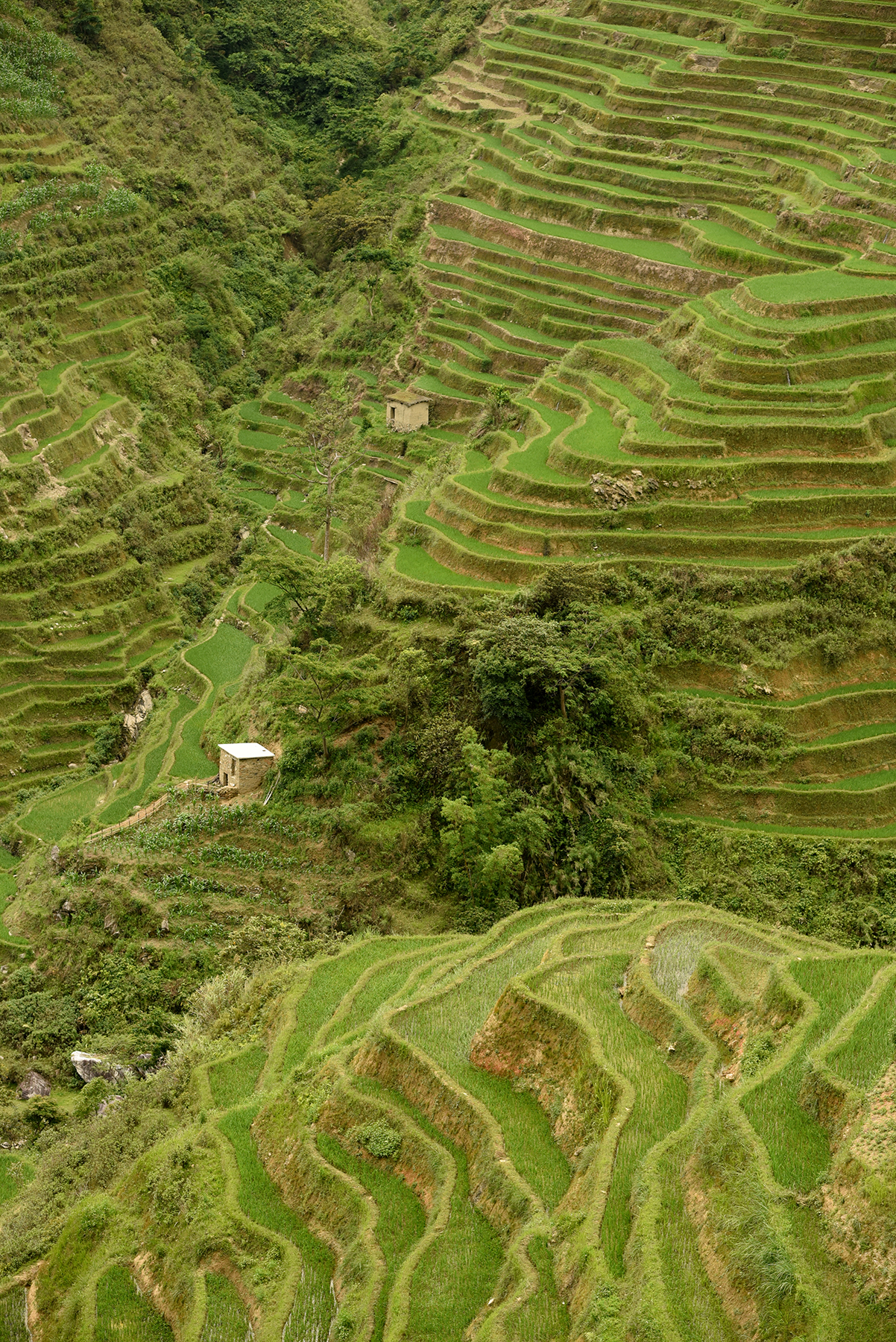 Terraced rice fields, a UNESCO World Heritage Site.