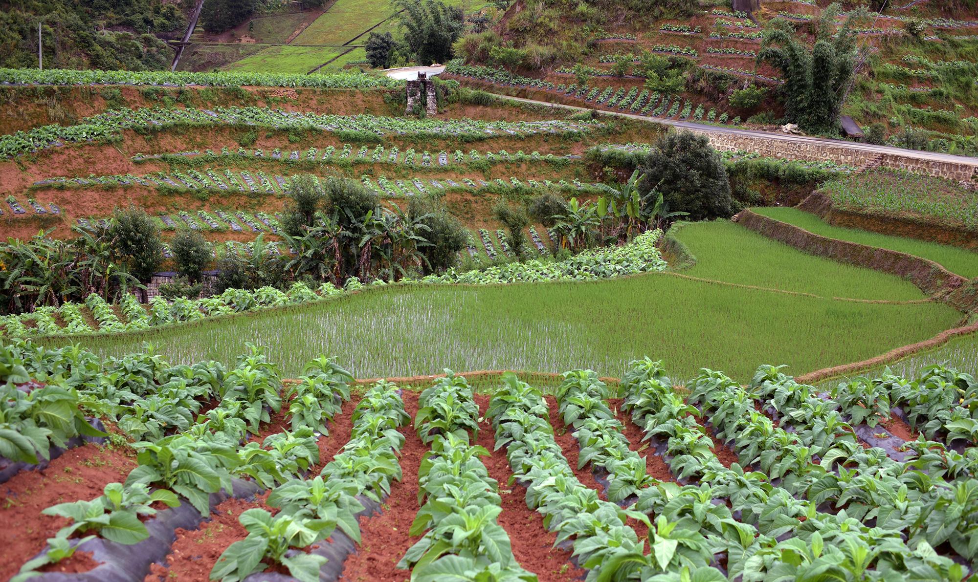 Farmlands of Yunnan Province