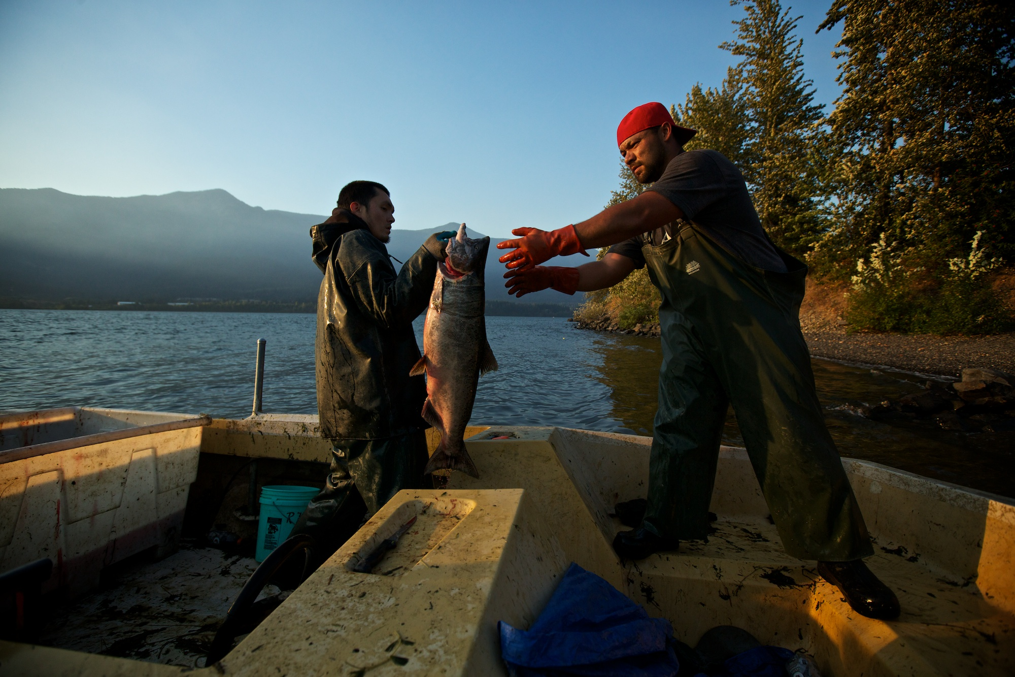 Unloading chinook salmon on the Columbia River.  Thomas Boyd/The Oregonian