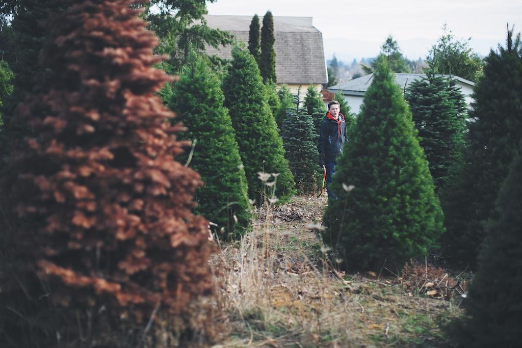 mistletoe_13U7333.jpg