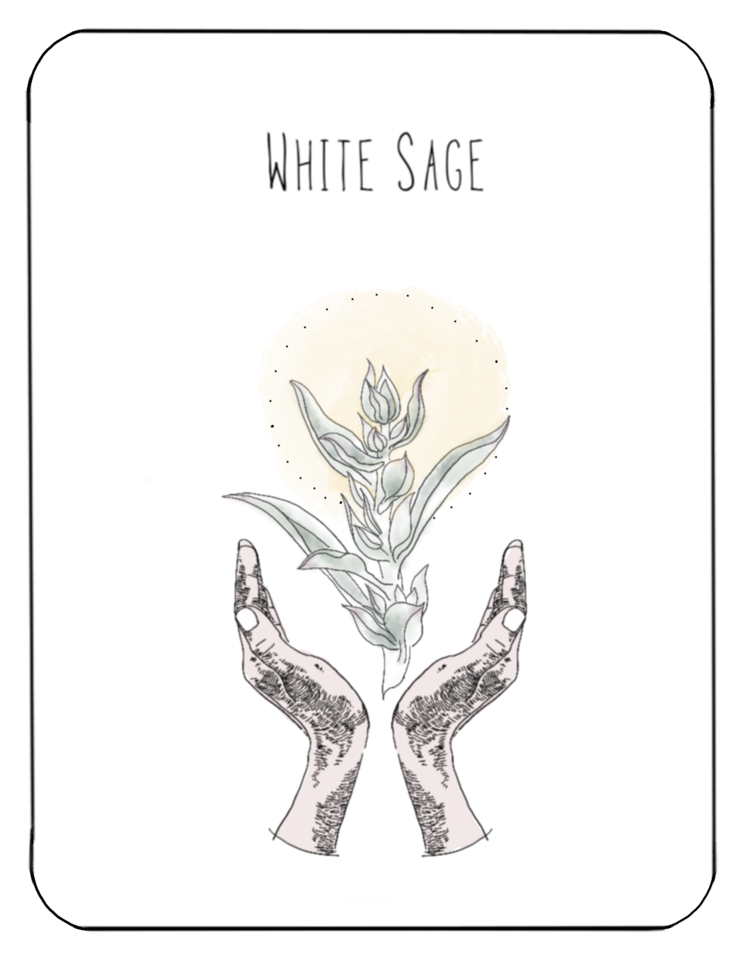 White_Sage.png