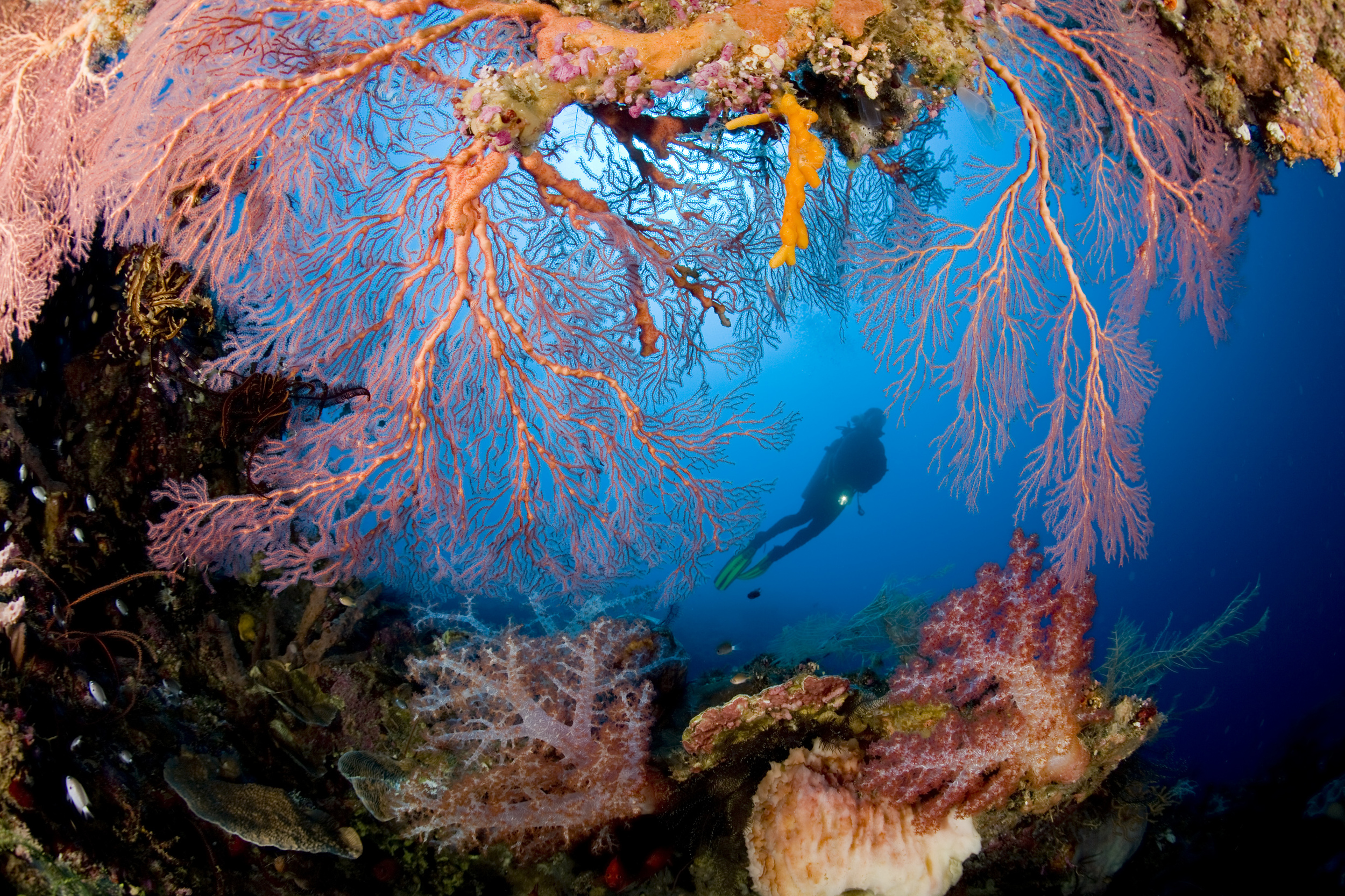Diving, Papua New Guinea