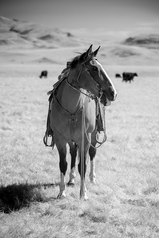 montana-monochrome-bw4.jpg