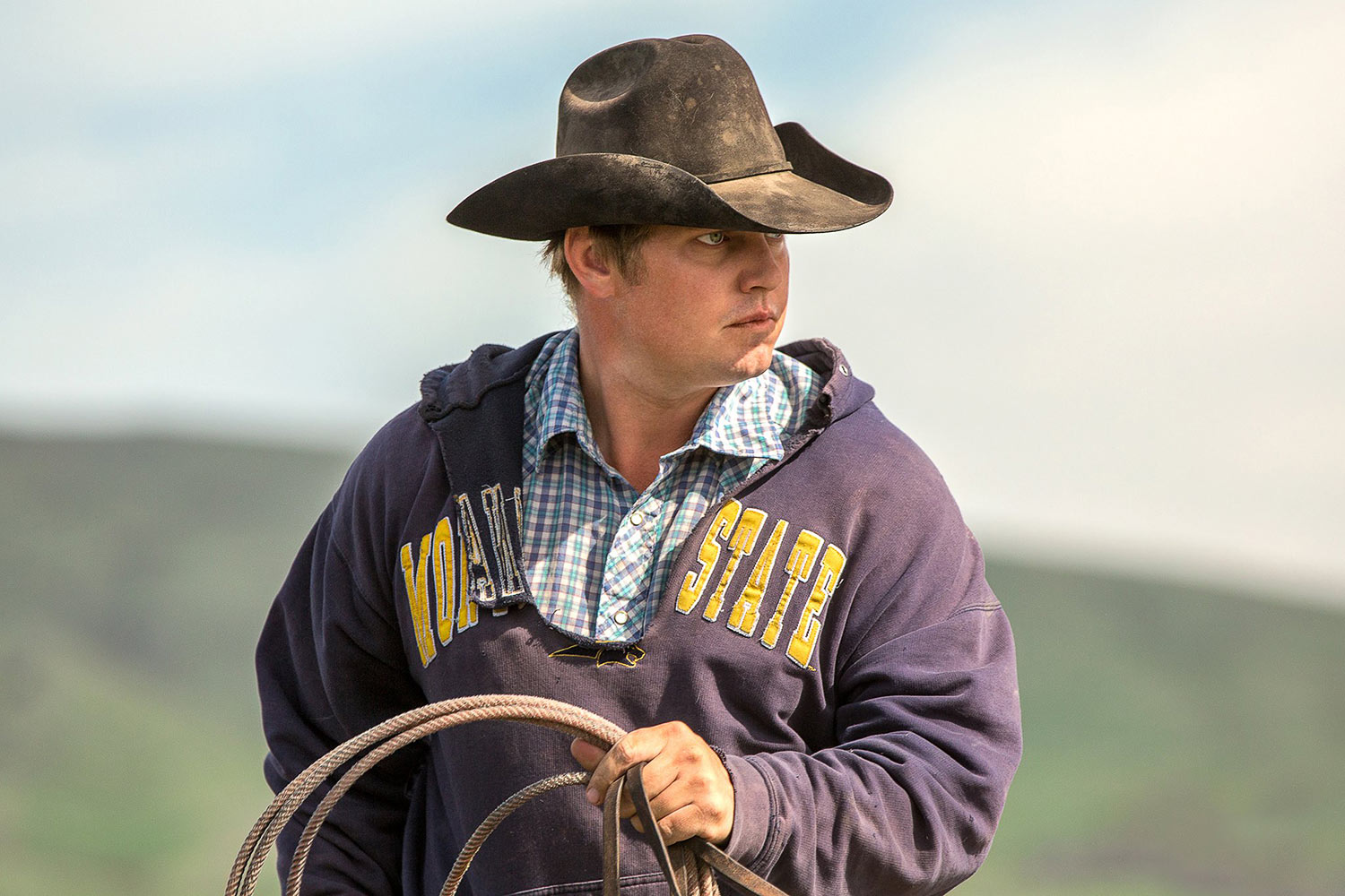 A cowboy wearing a torn Montana State University sweatshirts ropes cattle on a ranch near Cleveland, Montana .   → License Photo