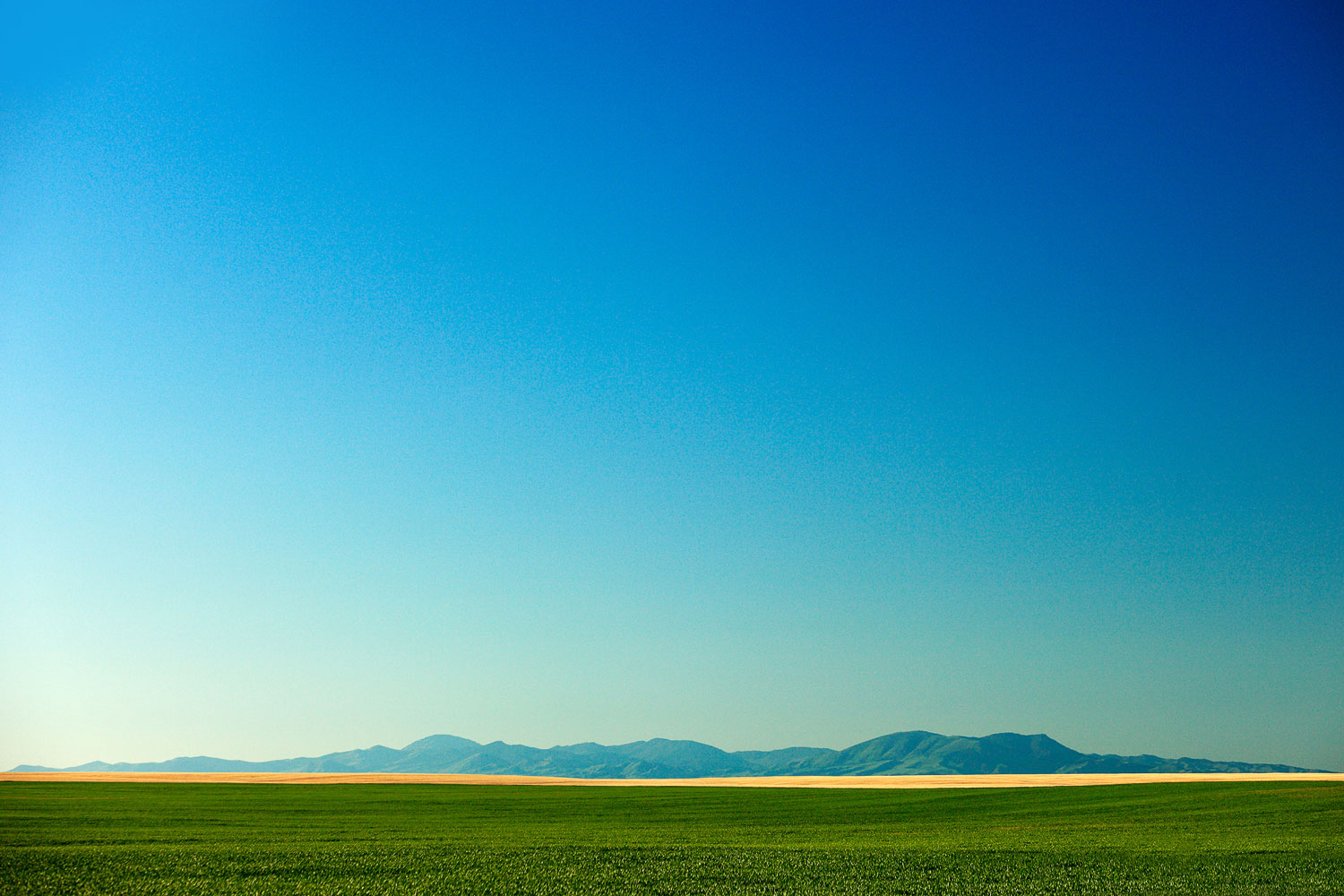 The western view of the Bear Paw Mountains near Havre, Montana.   → Buy a Print