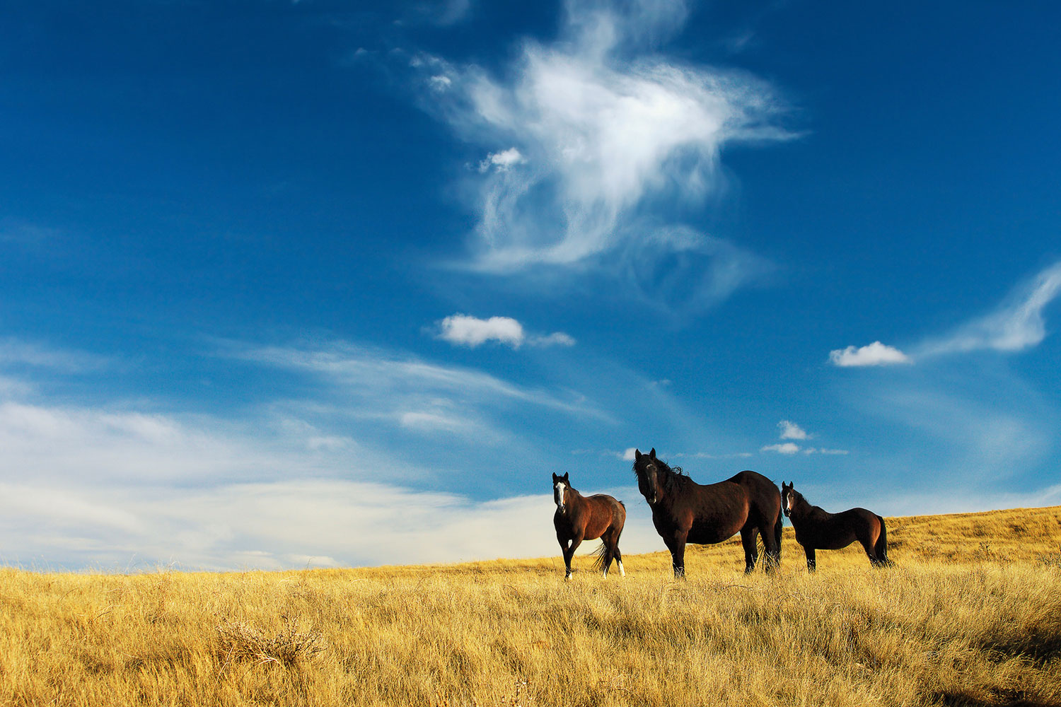 American quarter horses on the a serene open prairie outside of Havre, Montana.   → Buy a Print