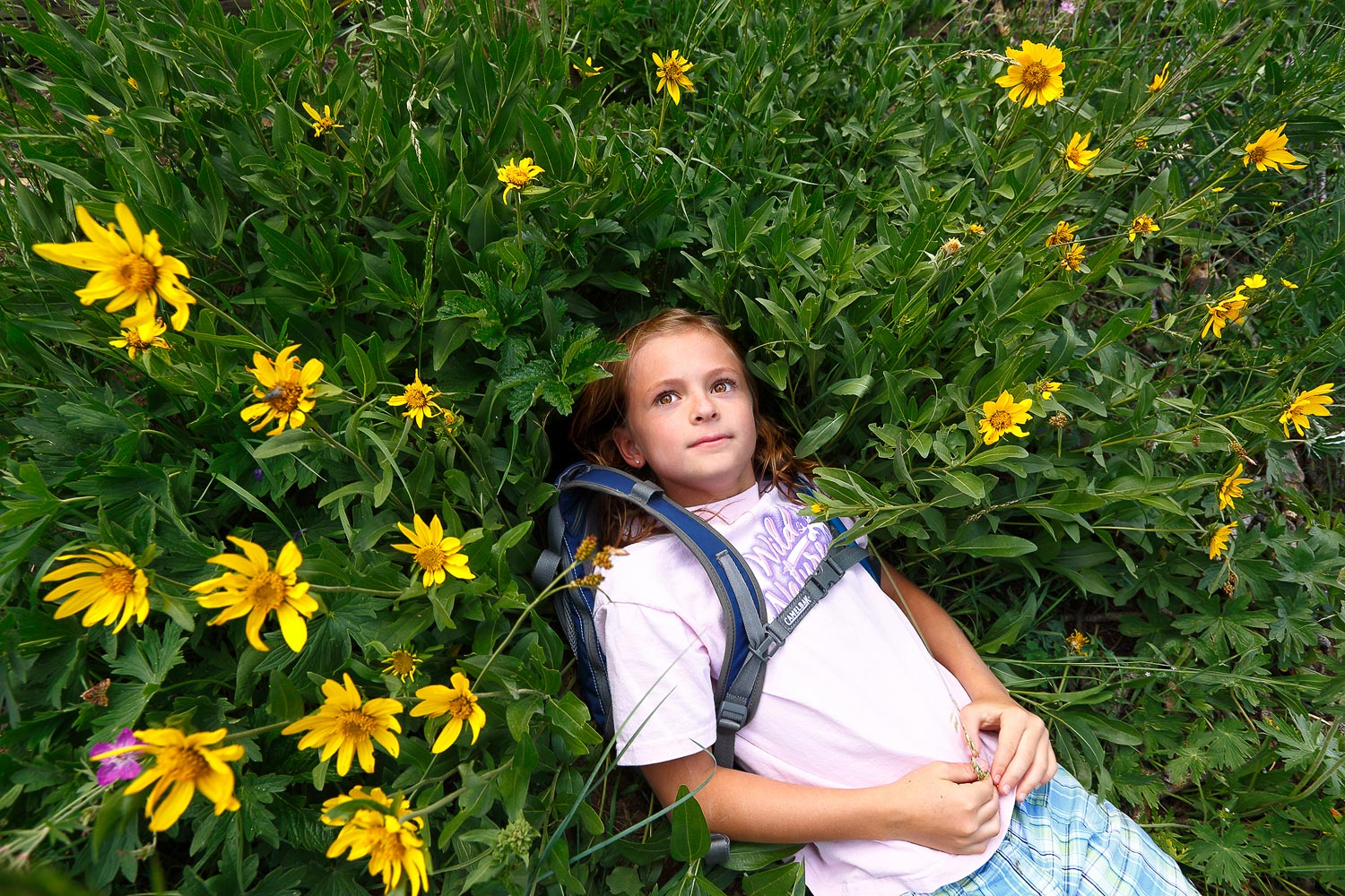Girl Laying in Wildflowers