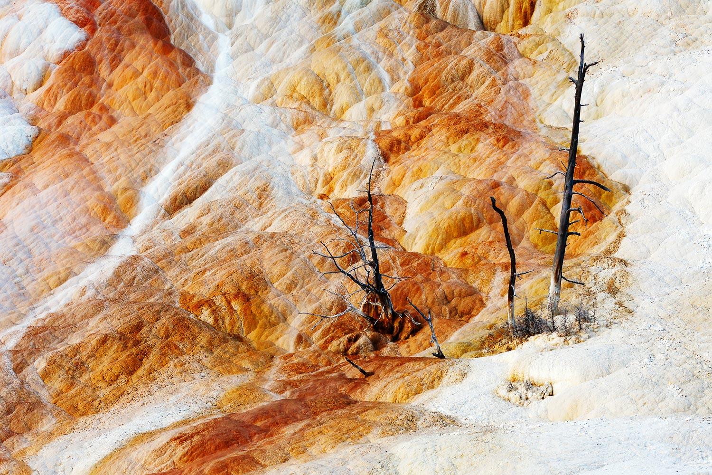 Prehistoric Trees