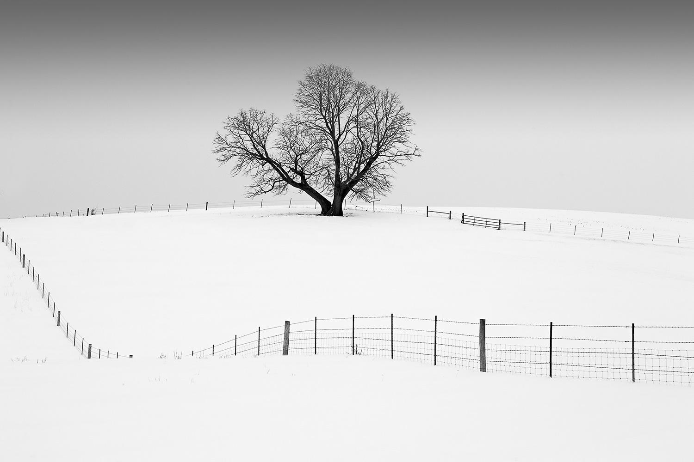 Mr. Elder Tree