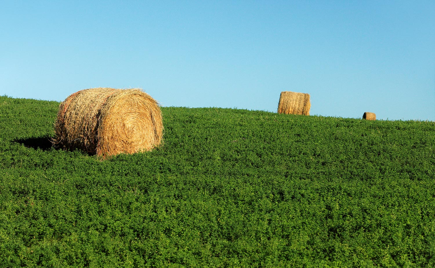 Old Bales New Alfalfa