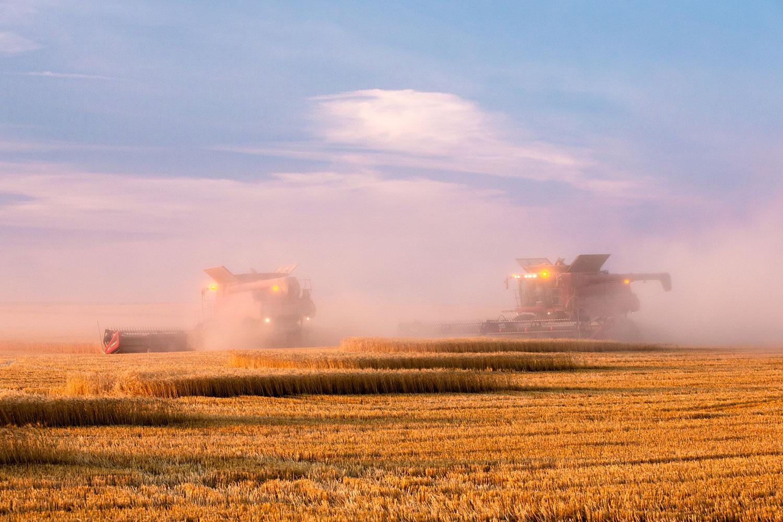 Harvestor in Magenta Cloud