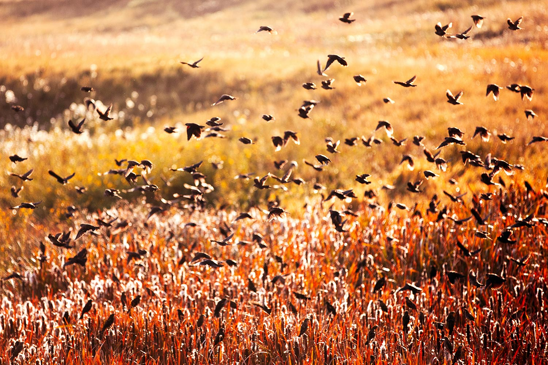Fall Flock
