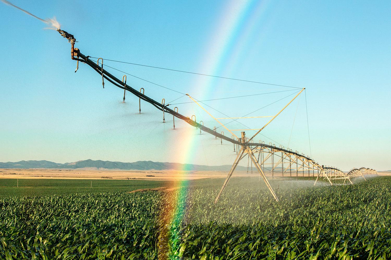 Rainbow Irrigation