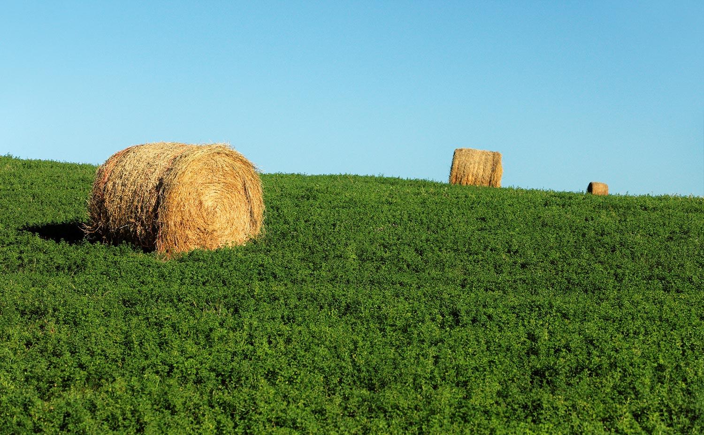 Old Bales New Alfalfa