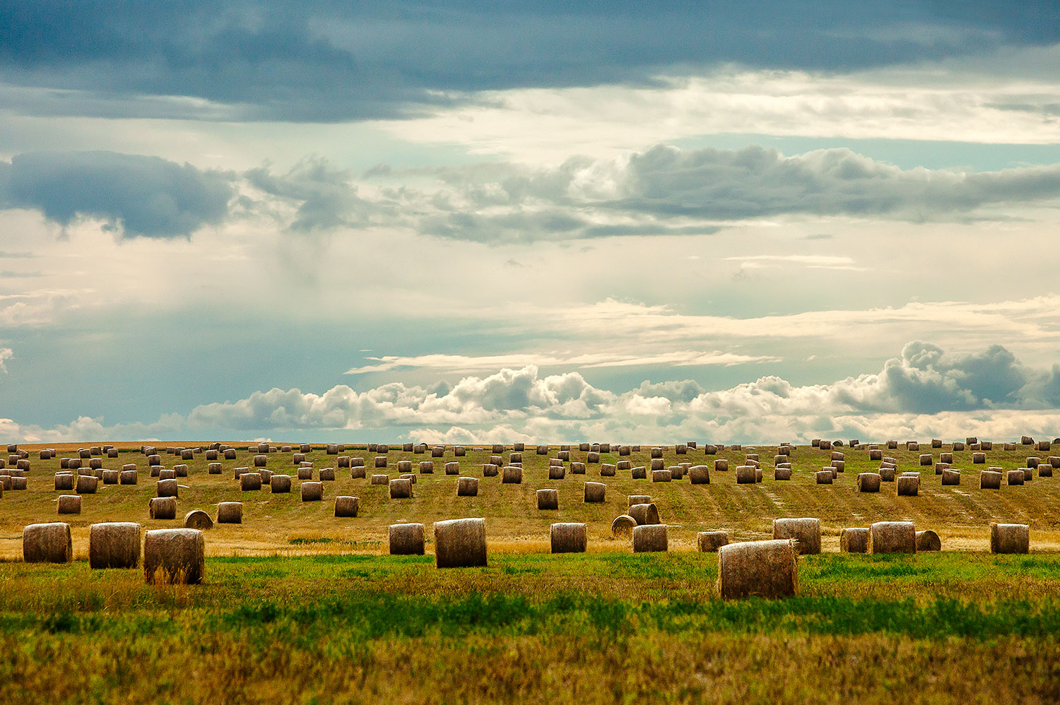 Littered with Bales