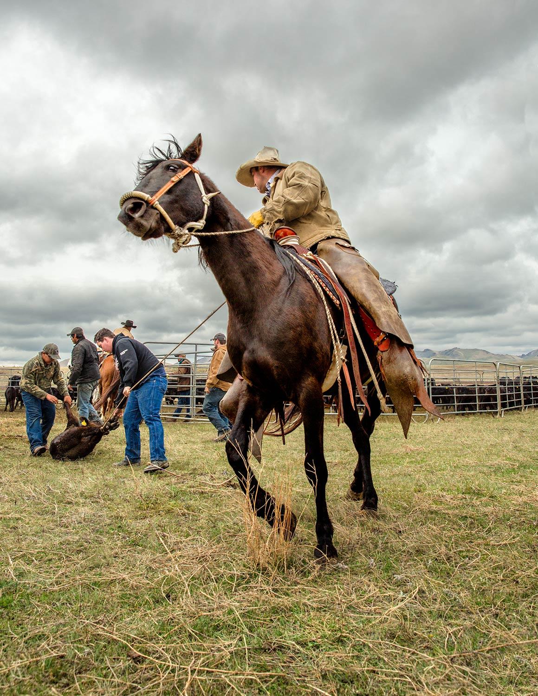 Cowboy Verve