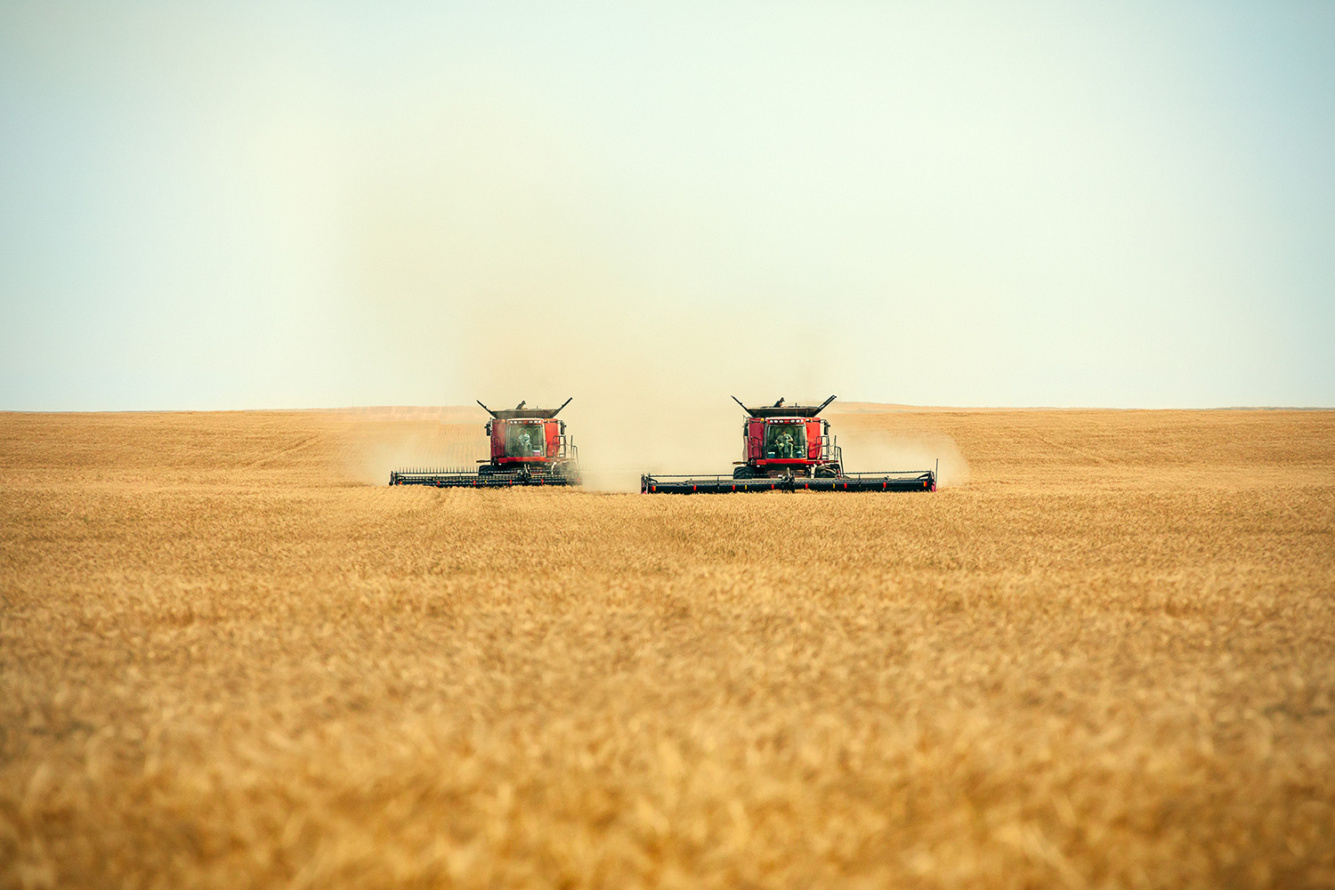 A pair of combines cutting a swath right down the middle of a wheat field north of Havre, Montana .   → Buy a Print