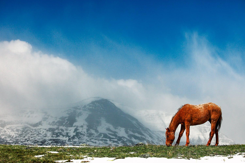 Alpine Equine
