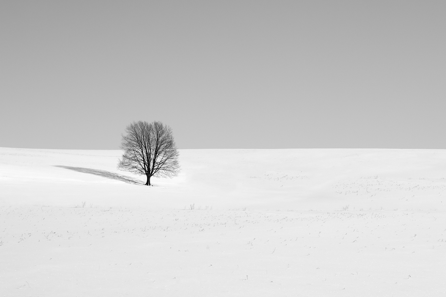 A lone, leafless tree surrounded by snow and sky.  → Buy a Print