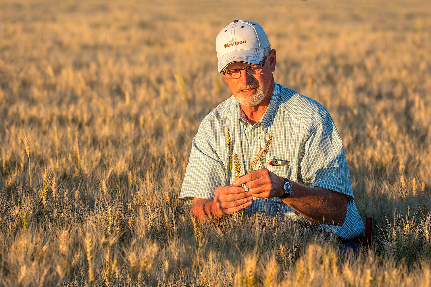 Checking Wheat