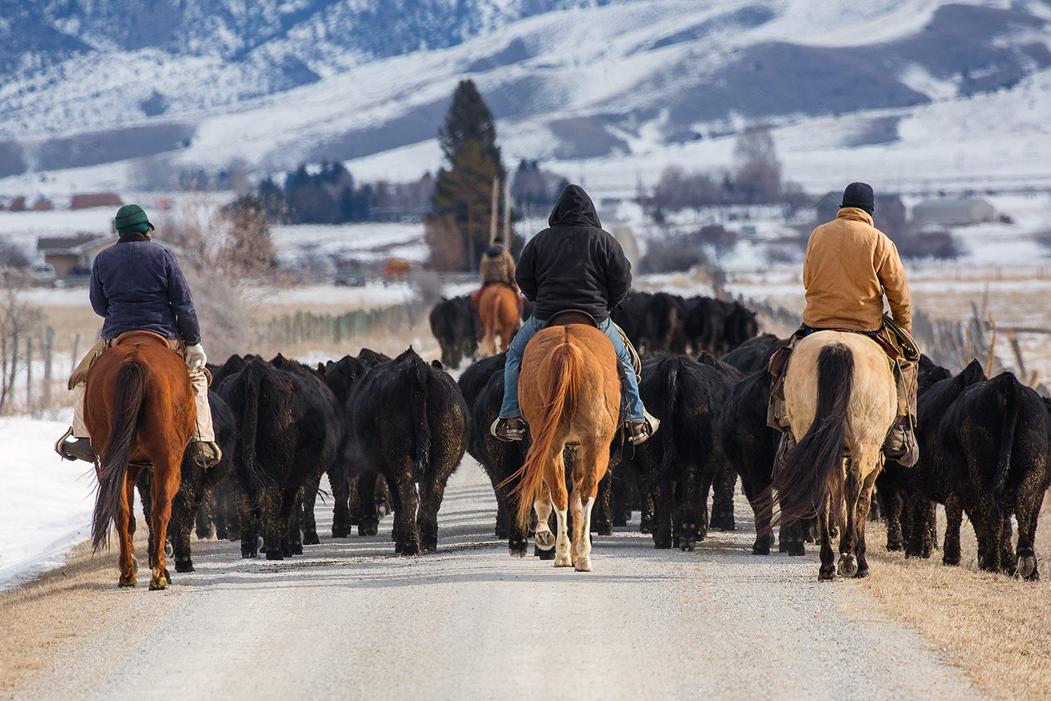 Driving the Herd