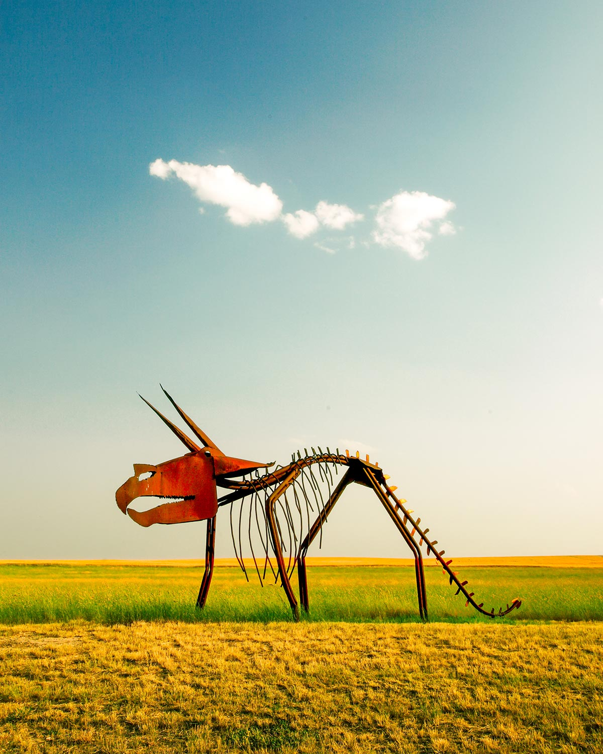 A metal sculpture in the form of a Triceratops dinosaur is an excellent example of rural Montana folk art. It can be found on the south side of U.S.   → Buy a Print     or   License Photo