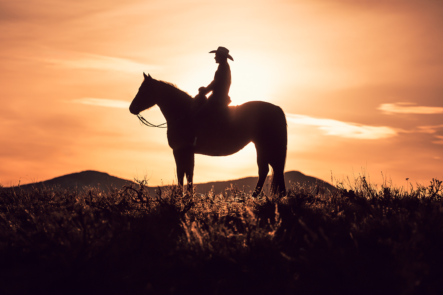 Sunlit Cowgirl