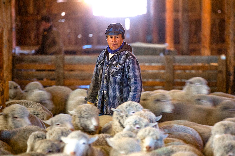 Moving Sheep