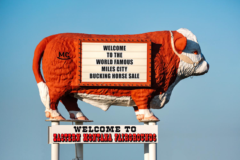 Eastern Montana Fairgrounds Cow