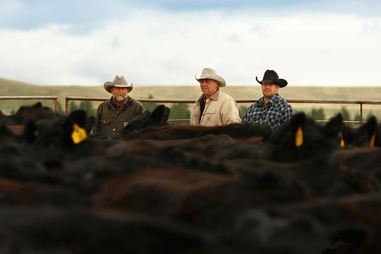 Looking Over the Herd
