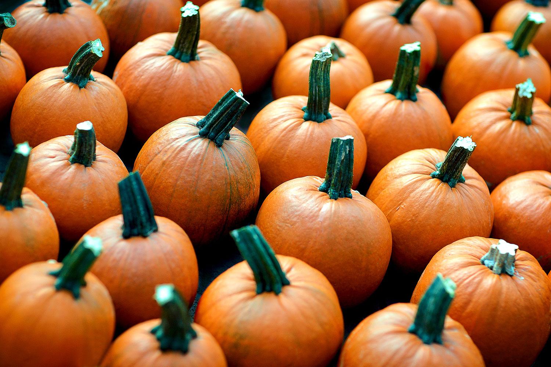 Plenty o' Pumpkins