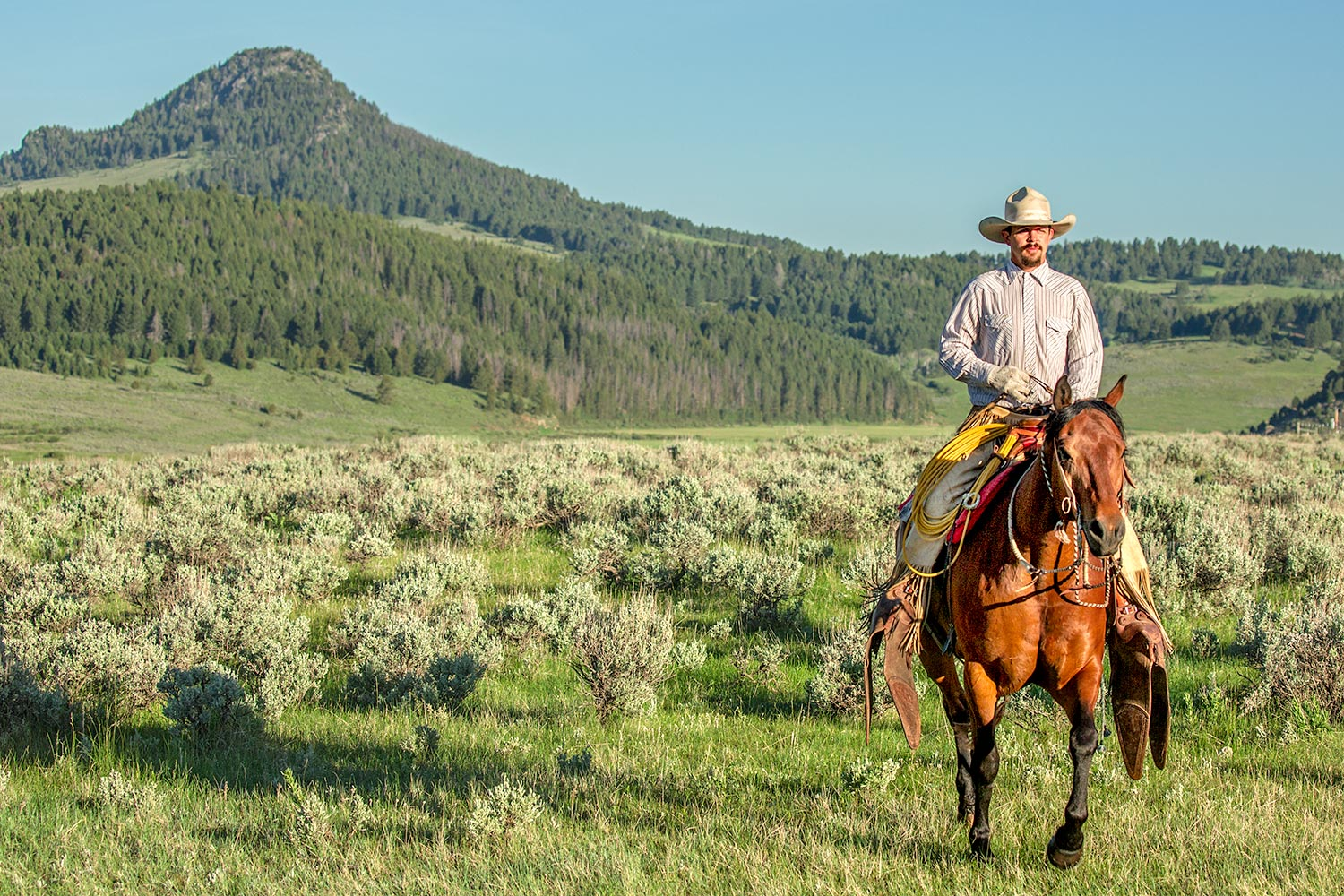 A cowboy rides his horse near Black Butte north of White Sulphur Springs through the lush green rolling hills of Meagher County, Montana.