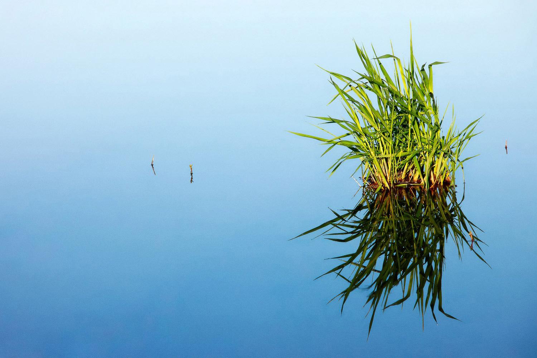 Grass in Blue