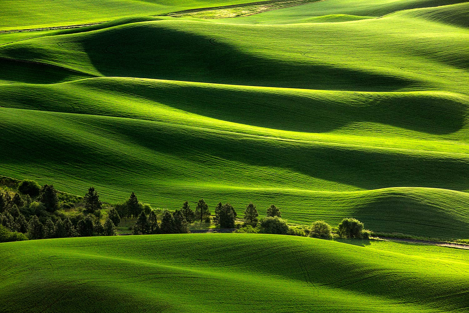 Blanketed in Green