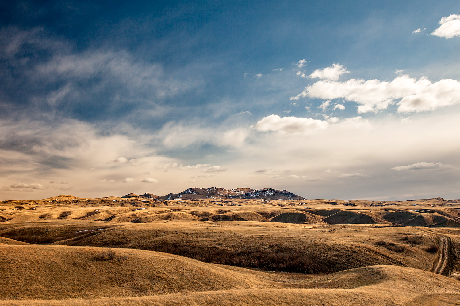 The rolling foothills of the Bear Paw Mountains south of Havre, Montana.   → Buy a Print   or   License Photo