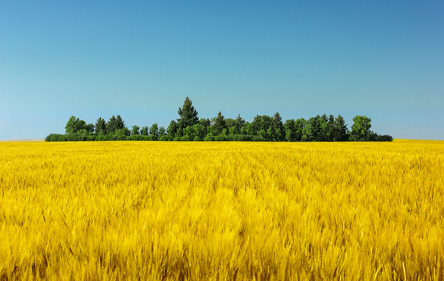 Yellow and Blue Make Green