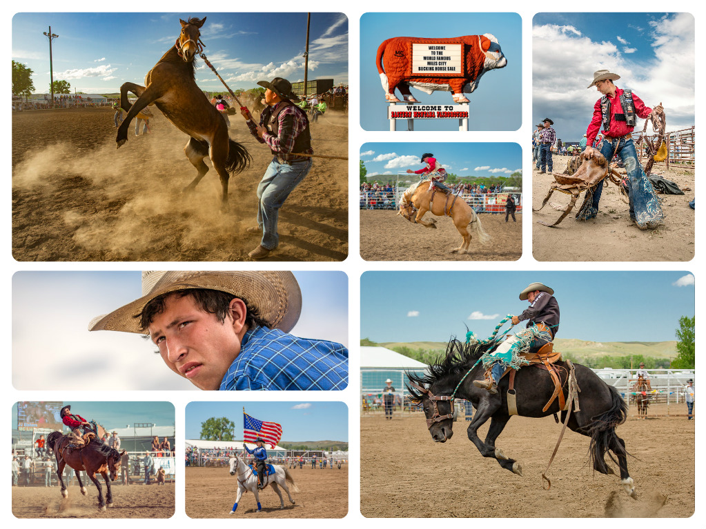 Photos of 2016 Miles City Bucking Horse Sale