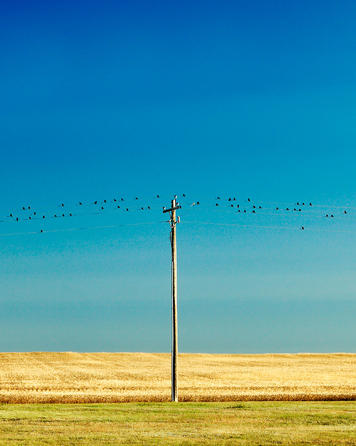 Birds and Pole