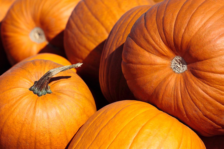 Pumpkins Picked
