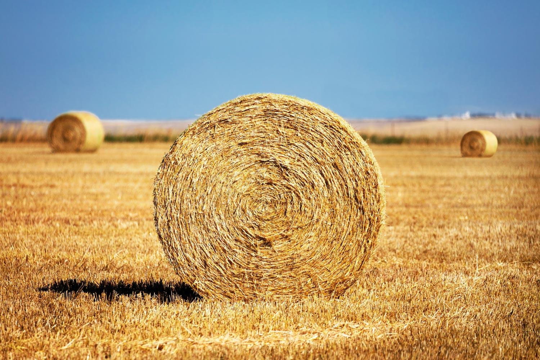 Round bales of wheat straw in a field west of Brady, Montana.