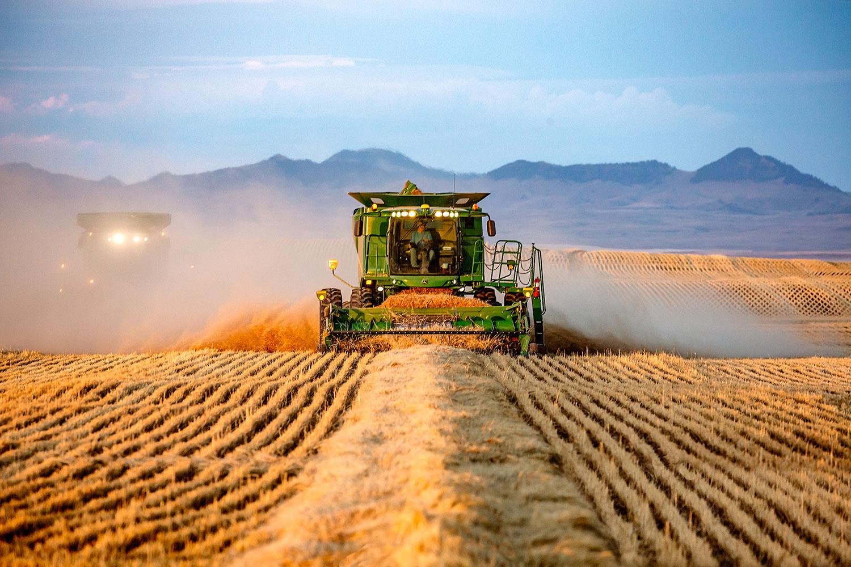 A John Deere combine threshing previously cut wheat on a farm near Big Sandy, Montana.  → Buy a Print  or   License Photo