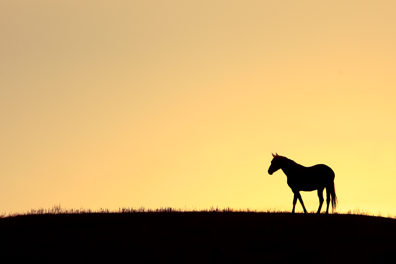 Horse on a Hilltop