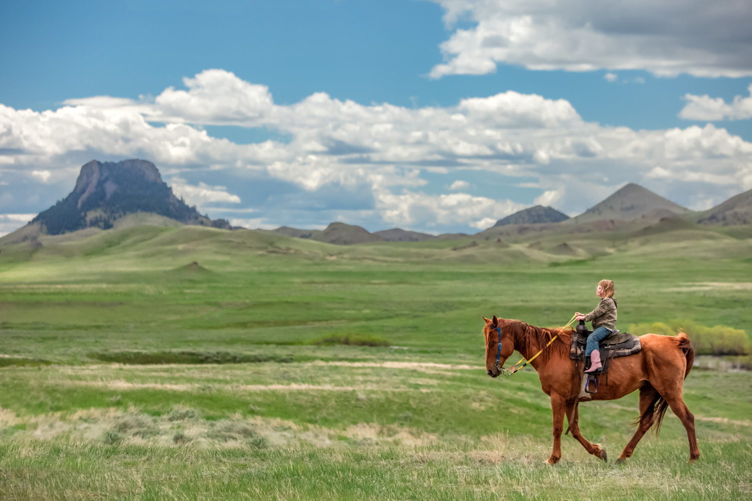 A photo of a young girl riding her horse across a large open field of prairie grass near Cleveland, Montana.   → License Photo