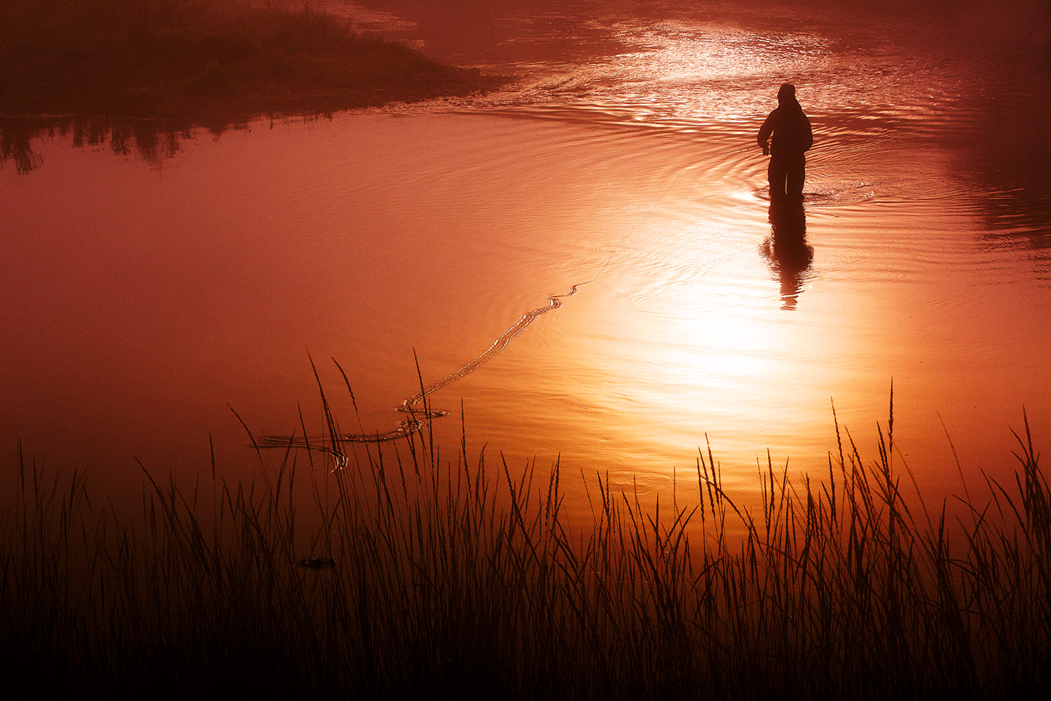 A fly fisherman trying his luck a the crack of dawn in a river near Cascade, Montana.   → License Photo