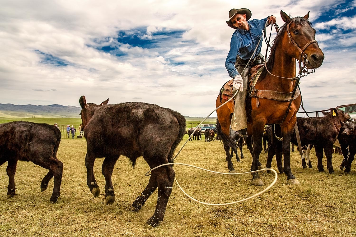 Photos-of-Cowboys-Roping-Cattle.jpg