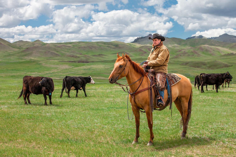 Watching Over the Herd