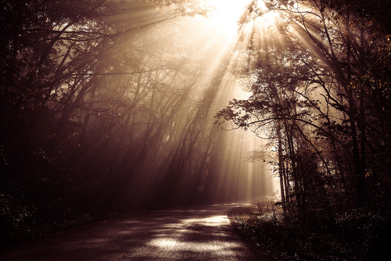 Enchanted Life