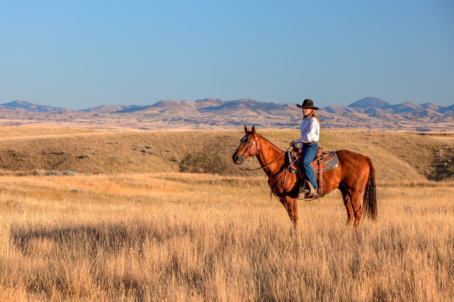 A cowgirl poses with her horse in tall grass near Havre, Montana.  → License Photo
