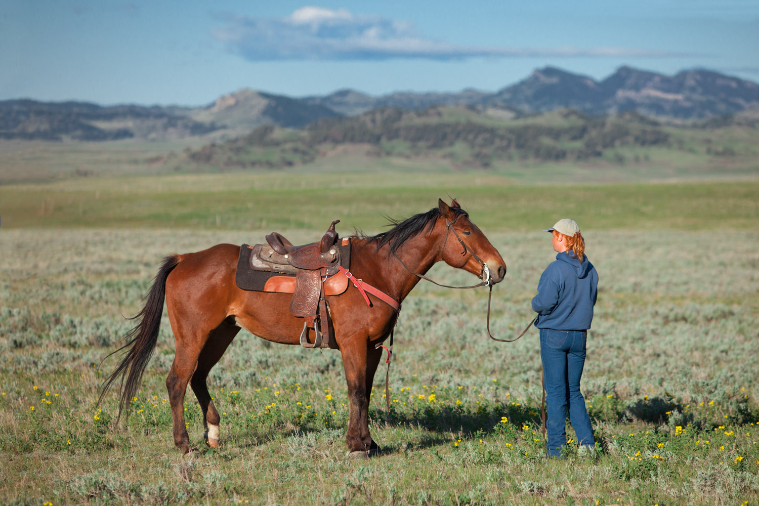 A cowgirl and her horse stand in the middle of a large field of green near Cleveland, Montana.   → License Photo